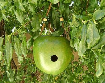 Apple BIRD HOUSE, Green Apple with Beads, Hand Painted Gourd Bird House. Ready to Ship