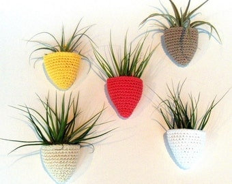 Air Plant Pockets - Wall Mounted Air Plant Container with Large Air Plant Included