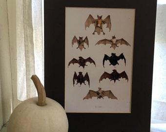 FLYING BATS PRINT - high quality color giclée of an assortment of bats - for halloween