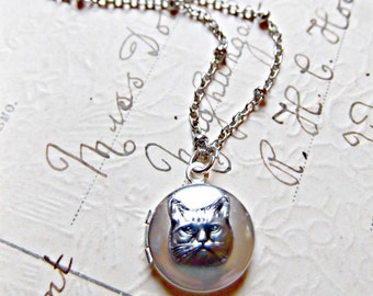 The World's Tiniest Cat Locket