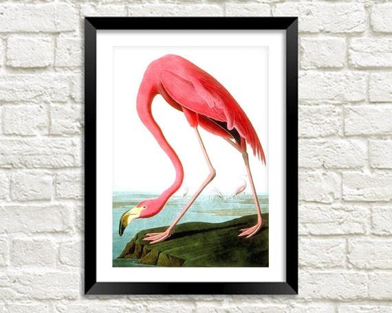 FLAMINGO BIRD PRINT: Vintage Pink Audubon Art Illustration