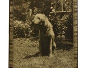 Vintage Black and White Photo - Dog in Yard - Framed, 1940s - Vintage dog photograph, dog in yard artwork