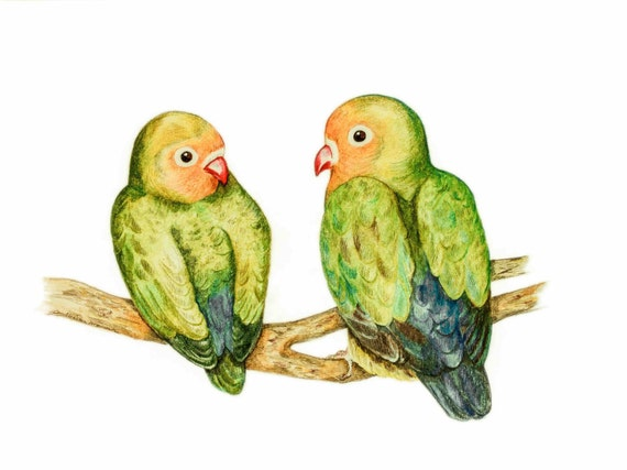Love Birds, LIMITED EDITION,  Fischers agapornis, Print of Pencil Drawing, Colourful Parrot, Love Bird, Fischer lovebird, Agapornis fischeri