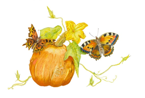LIMITED EDITION Vegan Art, A Beautoful Detailed Lush Pumpkin or Squash, Harvest Time, Pumpkin Art, Vegan Beauty, Orange Vegetable, Plant Art