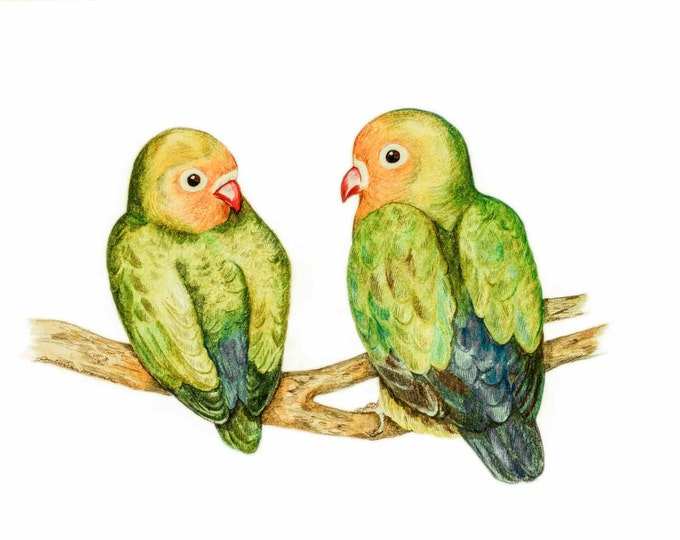ORIGINAL DRAWING of Love Birds, Love Bird Couple,  Fischers agapornis, Colourful Parrot, Highly Detailed Artwork with Beautiful Colours.