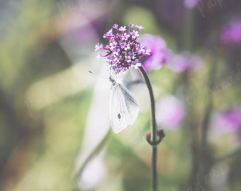 Moth on Flower Photo Download, Flower Garden Nature Photo, Bathroom Wall Decor, Large Photography Download, Printable Photo, Woodland, Soft