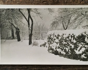 Original Vintage Photograph Winter Dog