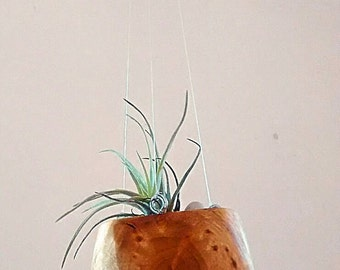 Wooden pot for air plant / wooden planters/ Savage wood/ Wiwiurka