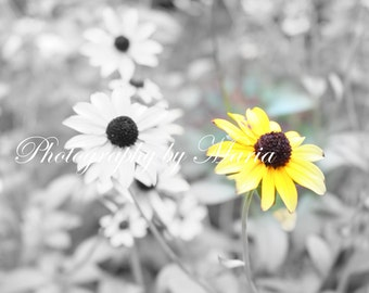 Single Black Eyed Susan - Photography by Maria