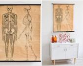 Skeleton chart, anatomical poster, anatomy print, skeleton print, Halloween decor