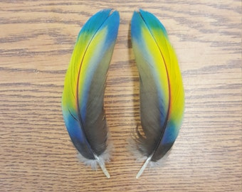 """Matched Pair Scarlet Macaw 4 1/4"""" Covert Wing Feathers ET3"""