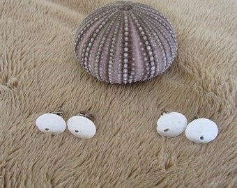 Geniune Sand Dollar Post Earrings