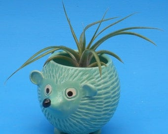 Large Hedgehog Planter, Succulents,Air Plants, Joyful Gift