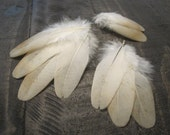 Light Buff Rooster Wing Feathers ~ Cruelty Free