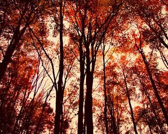 Fall Foliage, Autumn Print, Fall Print, Fall Photography, Fall Decor, Fall Picture, Fall Trees Print, Fall Scenic Print, Autumn, Fall Photo
