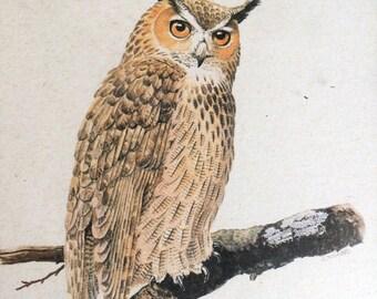 Vintage Etching of an Owl signed GCHNABEL, Framed