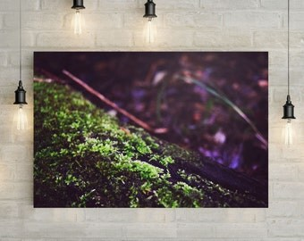 Log Moss Canvas Art, wall art canvas, canvas print, nature art, nature photography, nature prints