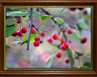 Fine Art wall print of red berries on tree photograph