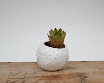Small handmade ceramic spiky succulent planter/ white flower pot/ planter for flowers/ air planter/ planter cover/ spiky planter/