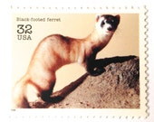 5 Unused Ferret Postage Stamps // Five Vintage Black-Footed Ferret Stamps for Mailing