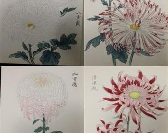 Original Antique Japanese Woodblock Print Books Chrysanthemum Flowers - Showa period  second Edition  Three Books Lavishly  illustrated