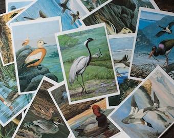 Set of 16 Vintage Bird Prints - Birds Illustrations, Natural History, Ornithology