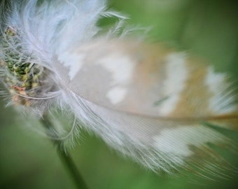 Feather Photography, Brown Feather Photograph, Sparrow Feather Picture, Nature Horizontal Wall Art, Wispy Bird Feather, Fine Art Photo Print