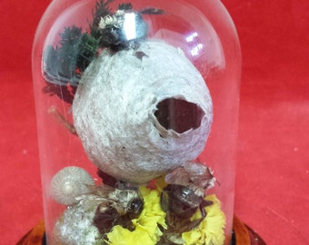 4 taxidermy bees & nest in small glass display dome #2