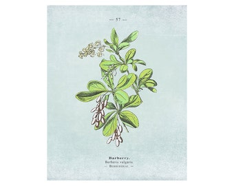 Printable Wall Art: Botanical Print, Botanical Art, Flower print, Vintage Botanical, Floral Print, Botanical Wall Art, Blue Wall Art