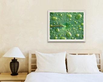 Green   Minimalist Wall Art Print   Lilly Pad