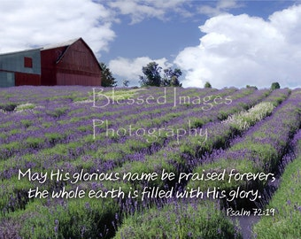 The earth is filled with lavender - Blank greeting card or Fine art print