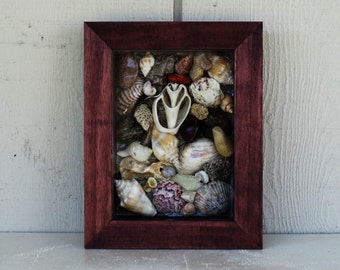 Shell & Stone Shadowbox