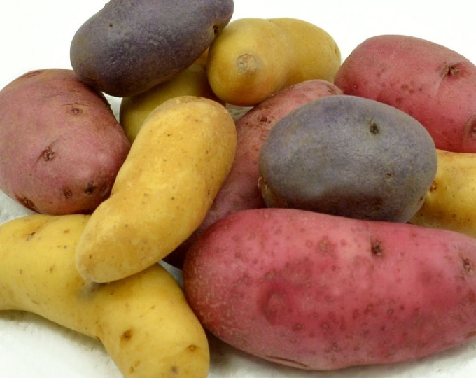Fingerling Seed Potato Assortment Certified Organic 3 Pound Gourmet Mix - Spring Shipping Non-GMO