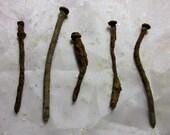 Genuine New Orleans Coffin Nails // Voodoo & Hoodoo