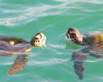 Sea Turtle...Sea Turtle Coastal Florida…Sea Turtle...Photo...Photograph...   Photography...Print…Sea Turtle Art