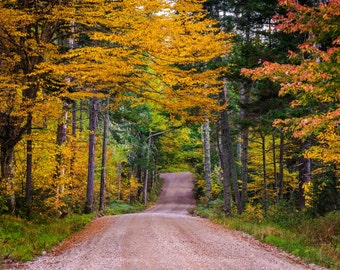 Autumn color along a dirt road in White Mountain National Forest, New Hampshire. | Photo Print, Stretched Canvas, or Metal Print.