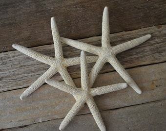 White Finger Starfish 3-4 inches| 1 pc