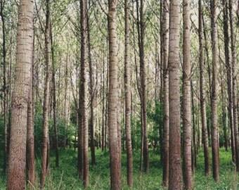 Woods PDF Cross Stitch Pattern