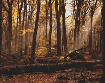 Forest Fog PDF Cross Stitch Pattern
