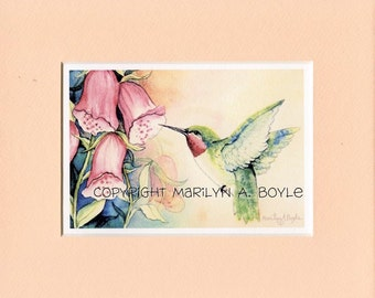 8 x 10 inch MATTED PRINT - HUMMINGBIRD; garden, ruby throat hummingbird, foxglove flowers, from an original watercolor, wall art