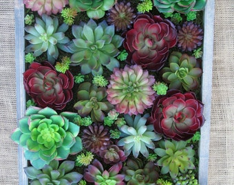 Succulent Wall Gardens that NEVER need ANY care