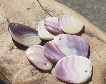 Quahog Shell Pendants, 8pc Top Drilled, Naturally Surf Tumbled Jewelry Making Pendant Charm (WAM-XL-04)