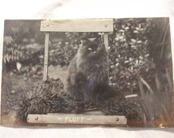 Antique Edwardian RP photo POSTCARD  - c1915 Fluff the Black CAT