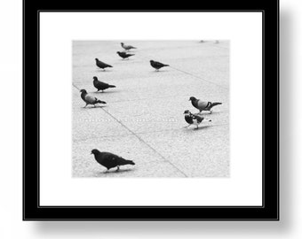 Square Print, PIGEONS in Chicago, Black and White Photography, Birds, Nature Fine Art print, City, OFFICE DECOR, Home Wall Decor.