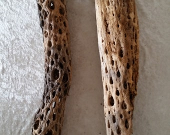 Cholla Cactus Skeletons Dried (2)  FREE SHIPPING