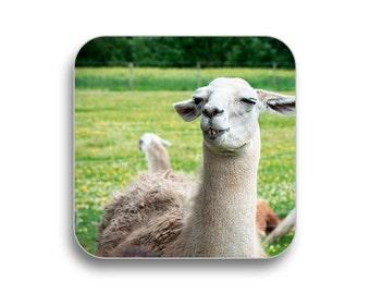 Llama - drink coaster, birthday gift, coaster gift set, meme coaster, housewamring gift 2P014A