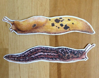 Banana Slug and Leopard Handmade Vinyl Stickers - Northwest species! Great stocking stuffer