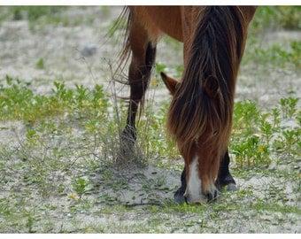 Shacklford Pony Getting Lunch