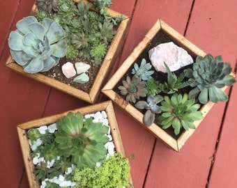 succulent planter with plants and stone