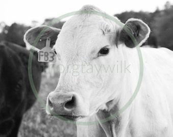COW PRINT - Download - Black and White Photography - Cattle - Cow Photography - Farm - Farm Decor - Farmhouse - Farmhouse Decor - Natural